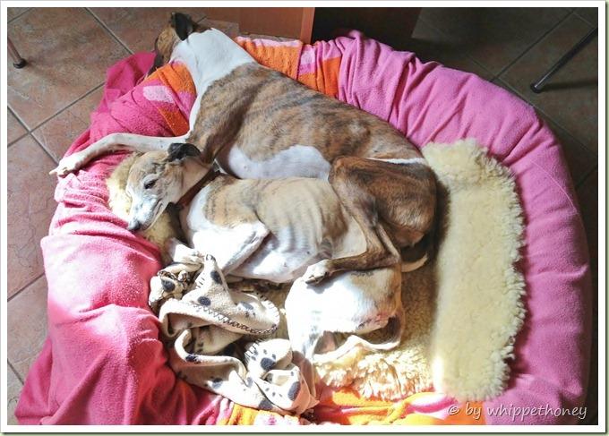 19.09.2012 Emmy & Scary liegen zusammen in der Sonne, das waren die letzten Stunden, wo es meiner geliebten Scary noch gut ging. Am gleichen Abend schon verschlechterte sich ihr gesundheitlicher  Zustand.