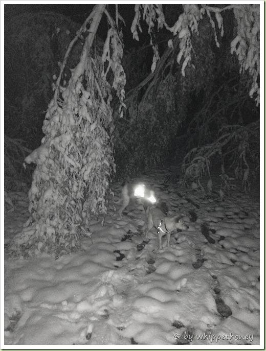 Emmy & Sina hatten im ERSTEN Schnee, auch ihre wahren Freuden, © by whippethoney